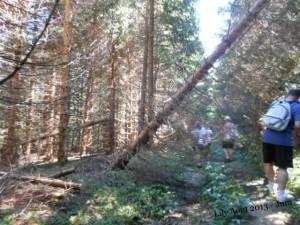 La Forêt du Massacre ... dans Loisirs/découvertes dscn1445-1-300x225