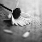 Prendre soin dans Méditations indifference-copie-1-150x150