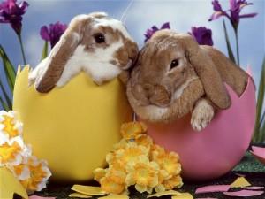 Pâques dans Méditations lapin-de-paques-300x225